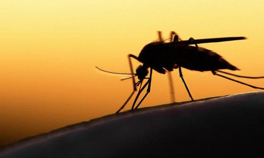 Populasi Nyamuk DBD Meningkat